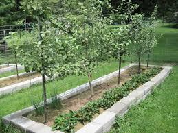 Part  How To Design Your Own Miniature Fruit Garden Abundant - Backyard orchard design