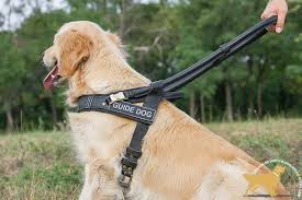 Comfort Golden Retriever Breeders Guide And Assistance Leather Golden Retriever Harness With Handle