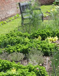 herb gardens planning a new herb garden part 1