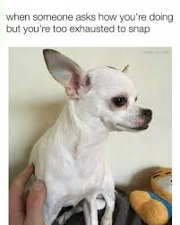 dopl3r com memes when someone asks how youre doing but youre