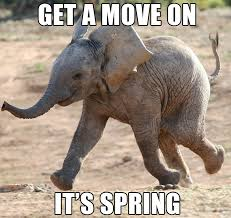 African Baby Meme - the memes of spring bigstock blog