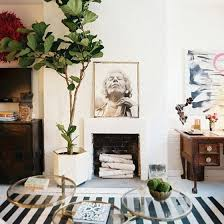 Fiddle Leaf Fig Tree Care by Live Laugh Decorate How To Take Care Of A Fiddle Leaf Fig Tree
