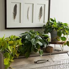 best low light house plants indoor plants for low light