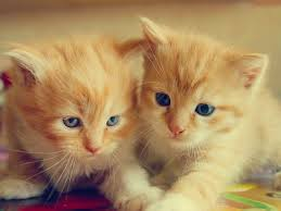 cute kittens compilation 2016 pictures of cats and kittens video