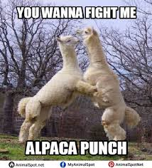 Alpaca Meme - alpaca meme different types of funny animal memes pinterest