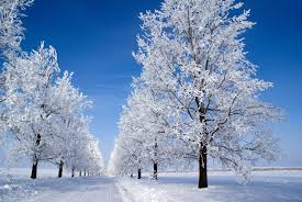 wallpaper winter snow tree alley road sky desktop wallpaper