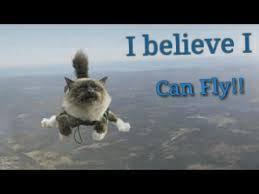 Flying Cat Meme - funny cat memes part 1 the flying cat wattpad