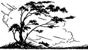 silhouette of the wind blowing trees and a rabbit