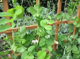 planning your garden u2013 fall and winter thoughts take root