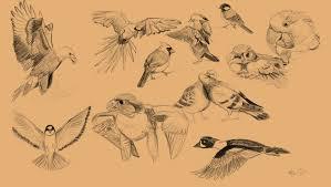 20 bird sketches by billtheartist on deviantart