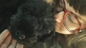 affenpinscher with underbite 5 things i learned from my rescue dog