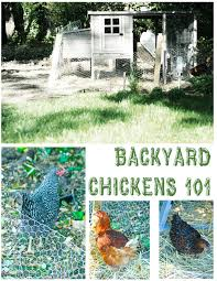 how to build a chicken coop raise backyard chickens dear