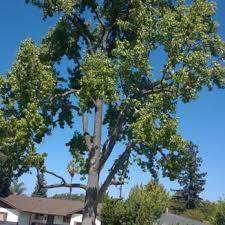 armando s tree service closed tree services west san jose