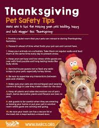 barcs thanksgiving safety tips for pets