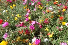 Salad With Edible Flowers - edible flowers edible flowers flowers and flower