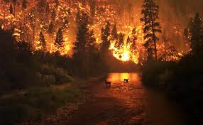 Wildfire Cali by Wildfires Threatening 700 Homes In Northern California Under