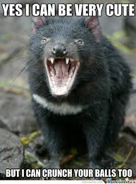 Tasmania Memes - tasmania memes 28 images memes tasmanian devil animal memes