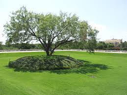 download trees for backyard landscaping solidaria garden