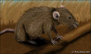 Are Mice Blind Field Mouse