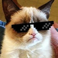 imagenes groseras de gatos gato grosero terans twitter