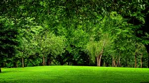 photo collection green trees wallpaper 2048x1370