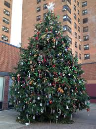large natural record breaking christmas trees for your community
