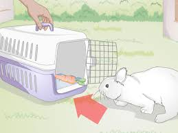 how to hold a rabbit 12 steps with pictures wikihow