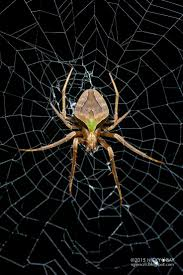 828 best spiders images on pinterest spiders insects and bugs