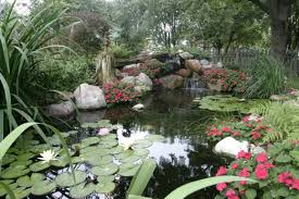 valleywide ponds bringing nature and tranquility to your backyard