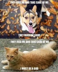 Cat And Dog Memes - dog religion cat religion