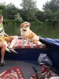 thames river boats dogs dog friendly holidays uk river thames myrivercruising
