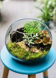 terrarium in glass bowl gumtree australia free local classifieds