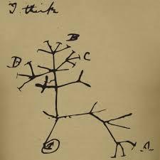 science merch darwin i think tree mens t shirt