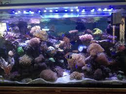Aquarium Led Lighting Fixtures The Benefits Of Using Led Aquarium Lighting Shenzhen Woqinfeng