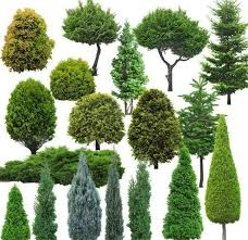 get cheap selling trees aliexpress alibaba