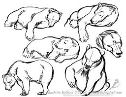 columbus zoo sleepy polar bears alaskan brown bears