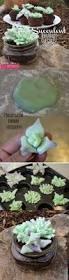 succulent terrarium cupcakes marshmallow fondant terraria and
