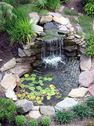 cute water lilies and koi fish in modern garden pond idea with