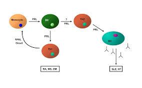 prolactin in the immune system intechopen