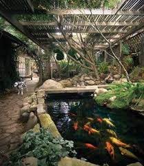 How To Build A Fish Pond In Your Backyard Best 25 Backyard Stream Ideas On Pinterest Moss Garden Garden