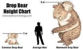 Bear Memes - drop bears mate meme by firebird8476 memedroid