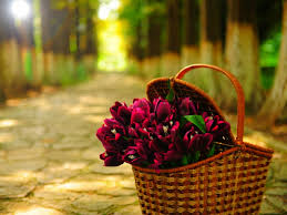 Beautiful Flowers Flowers Basket Wallpapers Hd Pictures U2013 One Hd Wallpaper Pictures