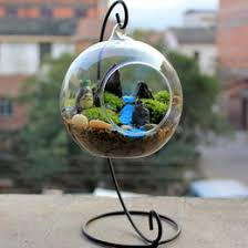 hanging glass terrarium containers nz buy new hanging glass