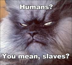 Colonel Meow Memes - colonel meow1 jpg