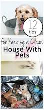 best 25 clean house ideas on pinterest house cleaning