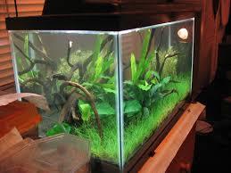 aquarium design exle planted aquarium fertilizer how to articles