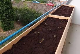 balkon hochbeet erdbeeren auf balkon hochbeet sonneneinstrahlung pflanzen