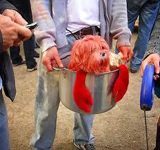 Human Dog Halloween Costumes 25 Dog Costumes Ideas Dog