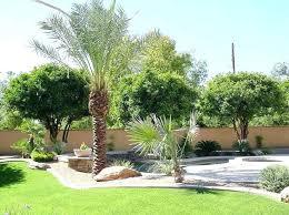 Tree Ideas For Backyard Backyard Palm Trees Filterstock