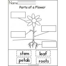parts of the body coloring pages for preschool best 25 plant science ideas on pinterest teaching plants
